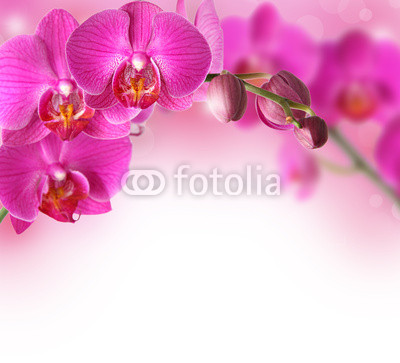 Orchids design border with copy space