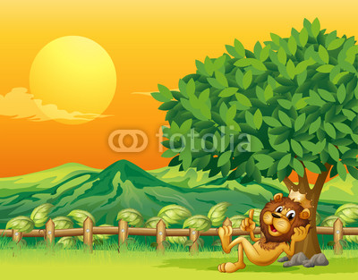 A king lion inside the wooden fence