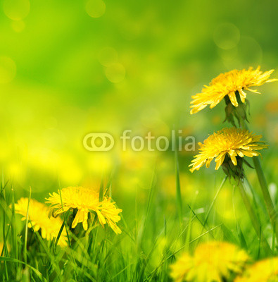 Beautiful spring flowers background